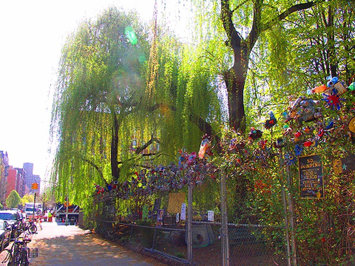 Harlem Community Garden